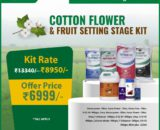 Cotton cultivation flower and fruit setting kit