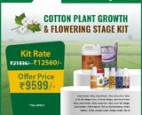 Cotton cultivation flowering stage kit